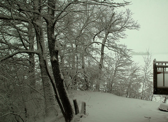 snow-and-woods